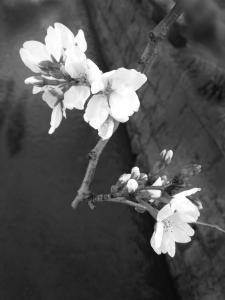 「前奏曲」 iPhone4s 白黒写真 作品