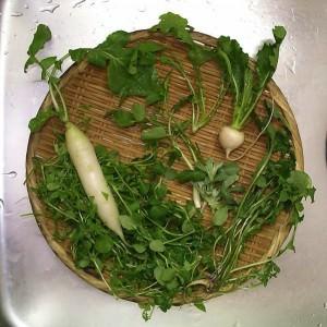【おいしいものレポ 2014-01-06】明日は1月7日。朝には「七草粥」を食べよう。雑草の料理紹介 記事がすごい。
