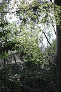Xperiaのようなきれいな森